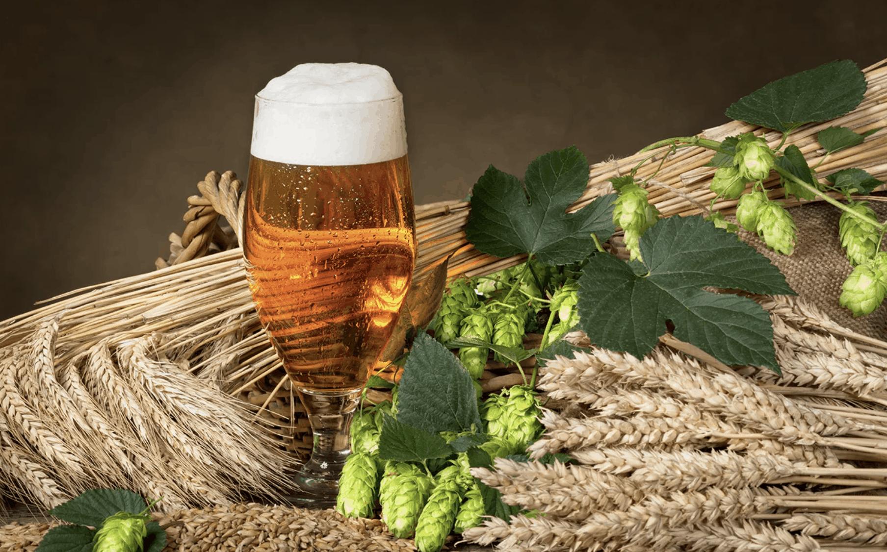 Рецепт домашнего пива сварить своими руками дома